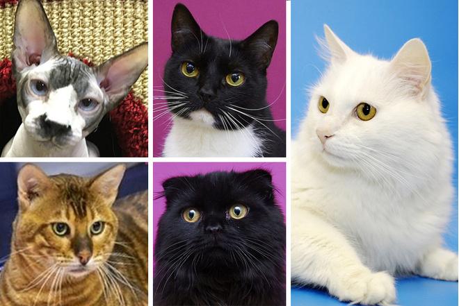 В Республике кошек стартуют выборы президента: фото, подробности