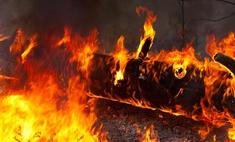 Главы регионов отчитаются о ситуации с лесными пожарами