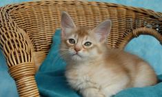 Кот прошел 3000 км, чтобы найти своих хозяев