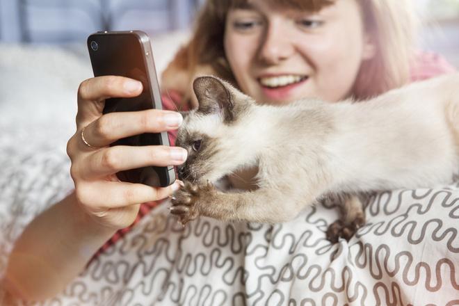 Как отучить котёнка кусаться и царапаться