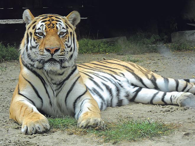 День рождения зоопарка в Ростове, ростовский зоопарк, зоопарк ростов цена
