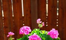 Пересаживаем комнатные цветы