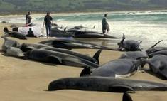 Более 100 дельфинов выбросились на берег в Новой Зеландии