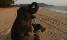 Умерла старейшая в мире слониха