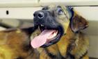 В Москве остановили метро, чтобы собака могла родить