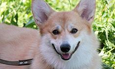 28 собак, которые заставят вас улыбнуться