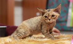 Это любовь: 30 самых необычных котиков