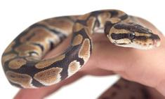 За красотой — к змеям