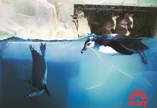 Пингвины в Казани