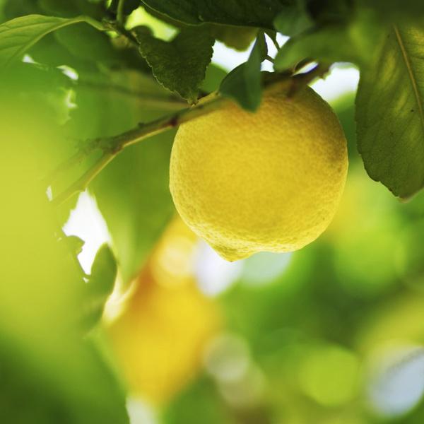 Эфирное лимонное масло