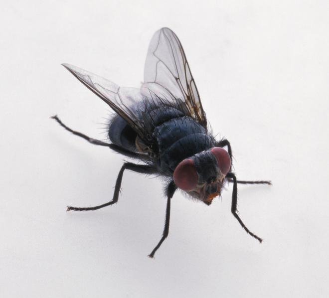 как уничтожить личинки мух