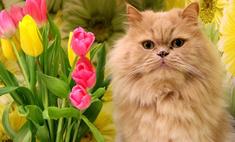 Март, солнце, коты! 25 рыжих пушистиков Казани