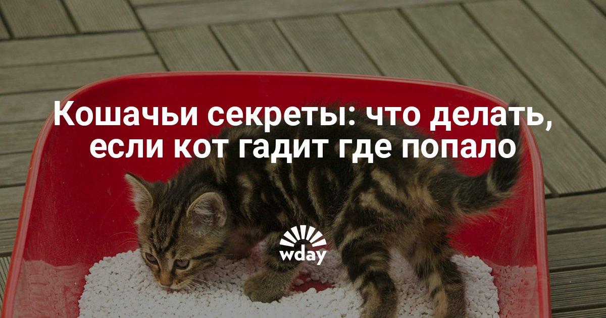 Почему кошки начинают гадить где попало