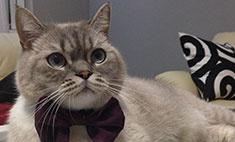 Кошки и собаки: голосуем за питомцев-стиляг!
