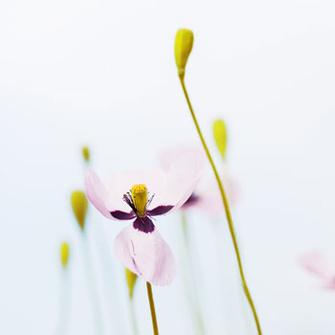 Весной мы меняем свои ритуалы красоты: переходим на более легкие текстуры, предпочитаем более свежие запахи парфюма