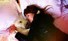 Оливия Уайлд назвала пса «единственным мужчиной в своей жизни»