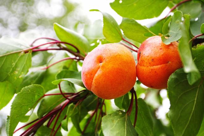 витамин содержится в абрикосе