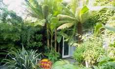 Кариота: уход за экзотической пальмой в домашних условиях