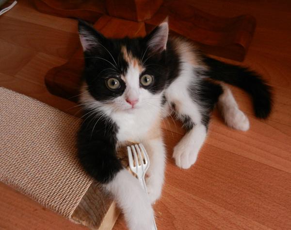Фотографии забавных котов
