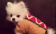 Пэрис Хилтон нарядила собаку хот-догом
