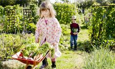 Инструкция: как собрать второй урожай
