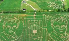 В Великобритании появился портрет Гарри Поттера на кукурузном поле