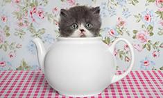 Котомания: 20 самых забавных котиков. Голосуй!