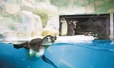 Пингвины, акулы, пираньи и еще 3500 видов океанских жителей прописались в Казани