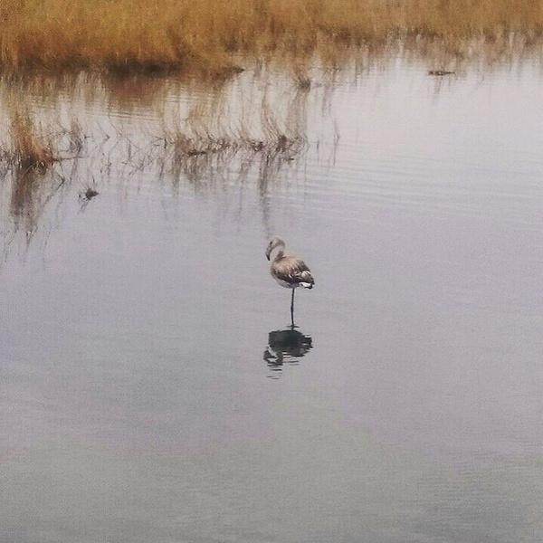 Магнитогорск, фламинго, Банное, соленое озеро
