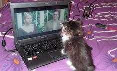 Любопытство не порок: выбираем самого любознательного кота