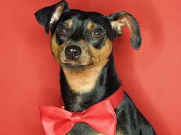Антирейтинг подарков к 8-му марта: хуже сковородки только собака