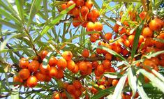 5 самых полезных ягод осени