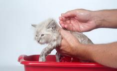 Уход за домашними животными: мытье кошки