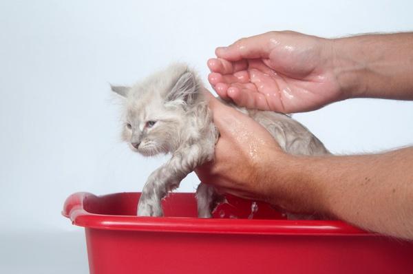Вымыть кошку