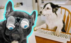 ученые назвали самые умные глупые породы собак