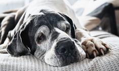 5 пород собак-долгожителей и 5 самых недолговечных