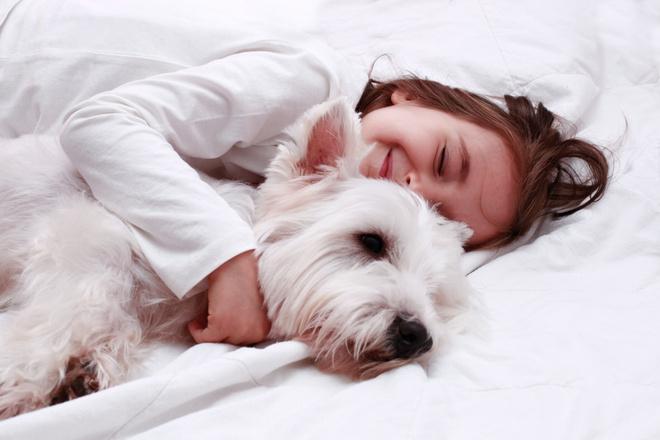 Собака для дома и детей, фото