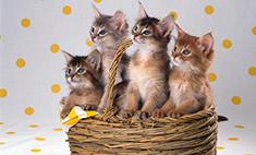 Кошки: какие породы популярны у ростовчан?