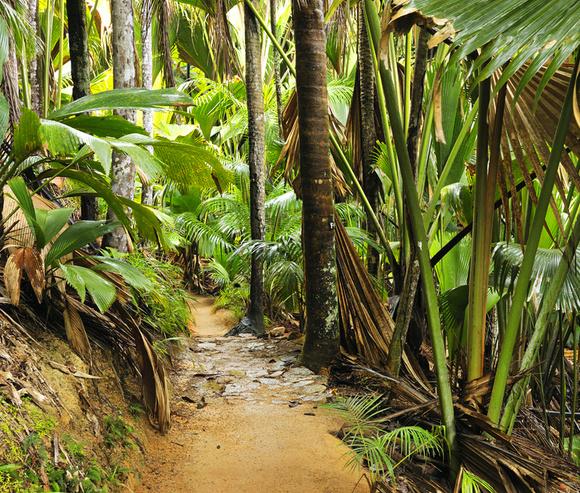 Ромовый дневник: лучшее на Сейшелах | галерея [2] фото [2]