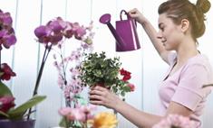 Зимний сад: как защитить комнатные цветы от вредителей