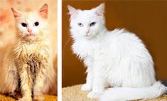 До и после: бездомные животные, которым повезло