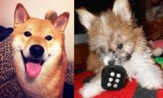 Топ-15 самых милых пермских собак: голосуй!