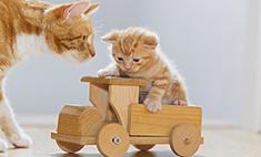 Котомания: 20 забавных котиков и кошечек Самары. Голосуй!