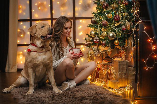 красивые собаки: фото