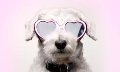 Лучшие друзья: самые очаровательные собаки Томска