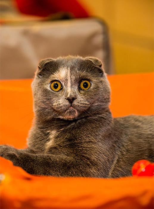 Международная выставка кошек в Ростове, день знаний, праздник знаний, семейный правздник, афиша ростов на дону, неделя знаний