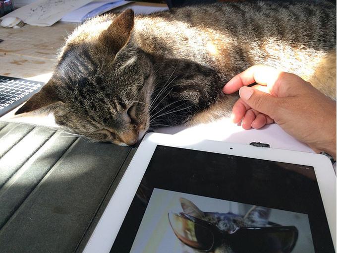 Плакать над котом