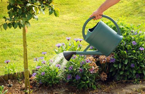 планировка сада, планировка участка, ландшафтный дизайн, советы ландшафтных дизайнеров, как спланировать сад, ошибки, клумба, газон, деревья, цветы, растения, садовая мебель