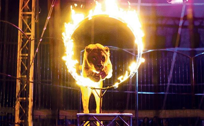 цирк шапито «Корона» в Ростове, отдых с детьми, афиша Ростова, цирк в ростове