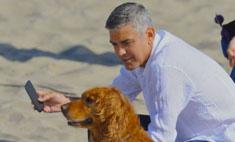 Вместо ребенка: Джордж Клуни взял собаку из приюта